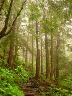 Ketchikan Trail, Ketchikan, Alaska. © Sharyn Sowell