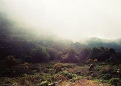 Caballos. by dirtyfromtherain, via Flickr
