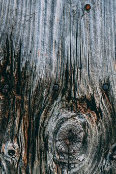 Free Knot In Aged Wood Texture Photo — High Res Pictures