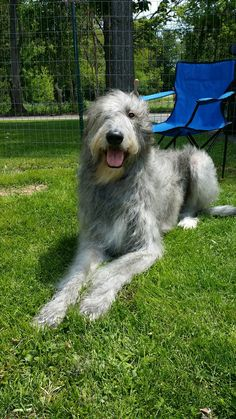 Russian Dog Breeds (Russian Dogs)