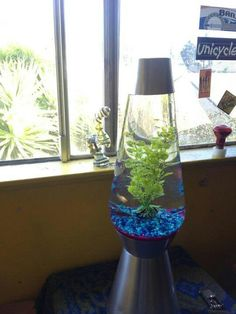 Turn your lava lamp into a fishtank** oooooh we should do this with the tall lamp! The lava lamp part doesn't work anymore.