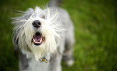 How to teach your dog the stop barking cue