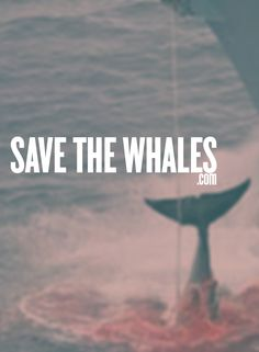 Help save the whales from being hunted! for educational purposes only.