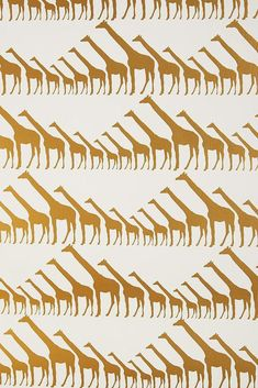have you ever seen this many giraffes?? | ban.do