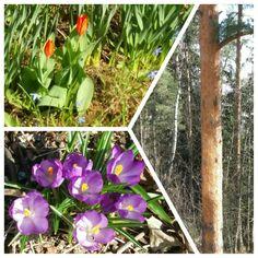 Kevään väreistä ja valosta piristystä päivään.