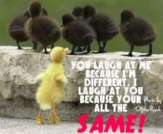 You laugh at me because I'm different. I laugh at you because your all the same!