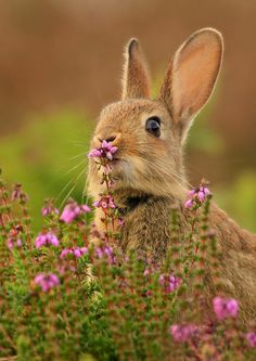 bunnies know to stop and smell the flowers