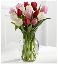 Tulips Garden, Tulips Flowers, All Flowers, Flowers Nature, Pretty Flowers, Flower Vases, White Tulips, Daffodils, Spring Flowers