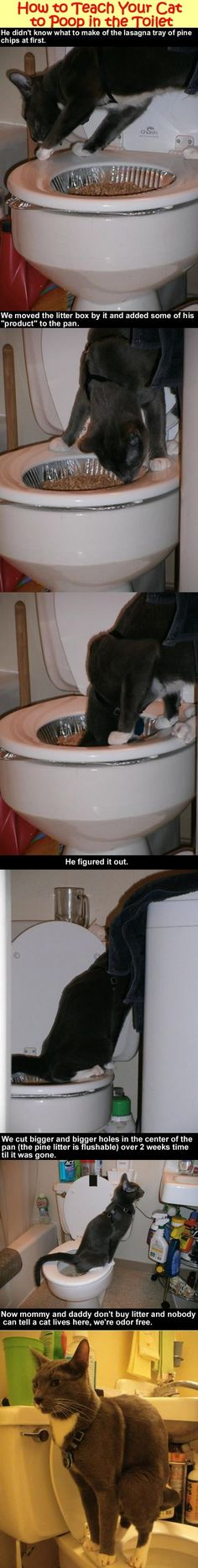 how to teach your cat to use the toilet