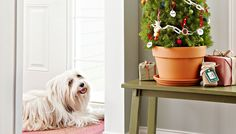 Decorate a Tree for Pets
