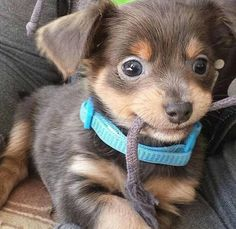 Meet With My Jerry!! i am very said he can't eat for 2 days. http://ift.tt/2b8VRnS via /r/dogpictures http://ift.tt/2buY5mo #lovabledogsaroundtheworld