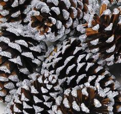 Get pine cones and silver wedding decorations to complete your Christmas designs, like these adorable natural tipped pine cones with a silver sparkle finish. Add these festive silver sparkle pine cone