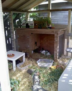 Lots to keep rabbits entertained in here. Pic rabbitats.org