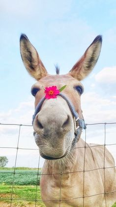 #donkey #donkeys #flower #cuteanimals #farmanimals