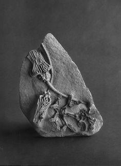 Grey fossil, #inspiration #moodboard #handmakemylife