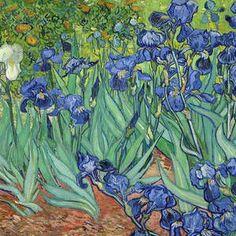 Irises by Vincent van Gogh Vincent Van Gogh, Stretched Canvas Prints, Canvas Art Prints, Oil On Canvas, Plant Wallpaper, Painting Wallpaper, Claude Monet, Painting Edges, Painting & Drawing