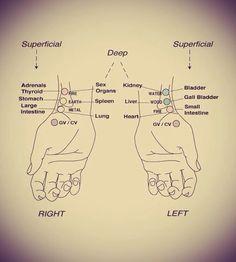 Punkty akupunkturowe na wewnętrznej stronie dłoni i rąk używane do diagnozy z pulsu. Jest to popularna technika w tzw. tradycyjnej medycynie.  Gabinet Akupunktury lek. Enkhjargal Dovchin www.gabinetakupunktury.warszawa.pl