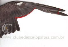 rolo de brinquedo calopsitas - Pesquisa Google