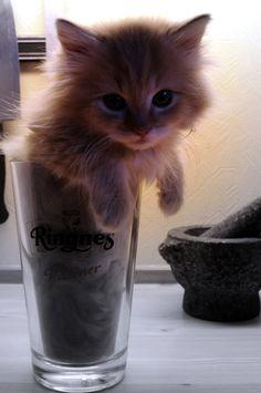 darn_cat_in_my_beer_by_detektenavnet.jpg (728×1097)