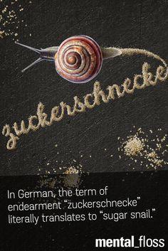 "In German, the term of endearment ""Zuckerschnecke"" literally translate to ""sugar snail""."