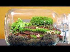 Làm thế nào để tạo một thế giới sinh vật thu nhỏ trong lồng kính