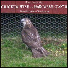 Coop Security: Hardware Cloth Vs Chicken Wire