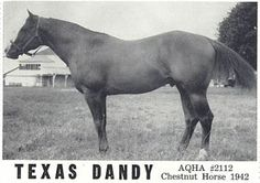 Texas Dandy, Dr Joe Kidd Quarter Horse