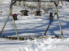 Backyard Bird Feeding Stations   Backyard Birding
