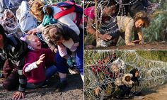 Syrian migrant girl gets hair tangled in barbed wire while scrambling into Hungary   Daily Mail Online