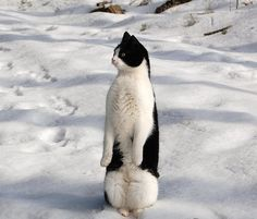 Do you know why the penguin's belly is white, the back is black? A: because penguins take a shower can wash to the stomach. Baby Animals, Funny Animals, Cute Animals, Crazy Cat Lady, Crazy Cats, Animal Pictures, Funny Pictures, Animals Photos, Tier Fotos
