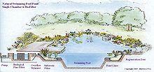 nature pool design