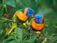 107 best imagenes de aves images on pinterest cute photos birds