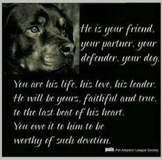 The Rottweiler - so truely devotional