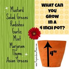 "What You Can Grow in a 4"" Pot"