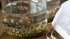 spruitgroenten in glazen pot