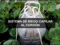 Huerto Casero de Quiquet: Sistema de riego capilar con cordón para huerto urbano