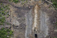 """2   (22.12.2017) Mas ele estava acompanhado do experiente sertanista José Carlos Meirelles, que trabalhou para a Fundação Nacional do Índio (Funai) durante 40 anos, e a dupla resolveu investigar uma área da mata com mais calma. """"Depois da chuva, a gente voltou e viu umas malocas feitas de palha. A gente estava voando muito rápido, mas vimos plantações e decidimos voltar. Encontramos a tribo e eu comecei a fotografar"""", relata o fotógrafo."""