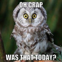 Funny Owl Meme Was That Today - Penguin Funny - Funny Penguin meme - - Funny Owl Meme Was That Today The post Funny Owl Meme Was That Today appeared first on Gag Dad. Funny Animal Memes, Cat Memes, Funny Animals, Cute Animals, Funny Owls, Funny Cute, Hilarious, Owl Quotes, Animal Quotes
