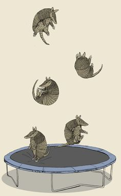Armadillo on a trampoline Armadillo, Motifs Animal, Art Et Illustration, Art Graphique, Illustrators, Graphic Art, Cool Art, Art Photography, Artsy
