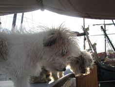 Mijn hondjes Beach en diesel