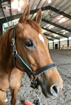 After being gone due to medical issues, I had some much needed Sailor time. I am so lucky to have this beautiful girl. Cute Horses, Pretty Horses, Horse Love, Beautiful Horses, Animals Beautiful, Animals And Pets, Baby Animals, Funny Animals, Cute Animals