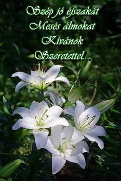 Good Mood, My Flower, Good Morning, Beautiful Flowers, Plants, Be Nice, Good Day, Bonjour, Pretty Flowers