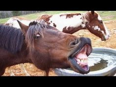 Animals screaming and making funny noises - Funny animal sounds   I LAUGHED SO HARD FOR SO LONG