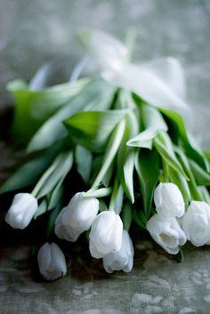 Beautiful white Tulips.