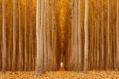Celebrating Fall With Heart Stopping Autumn Images You Must See!   ViewBug Blog   Bloglovin'