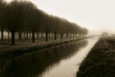 Trees, Canal and a Bridge