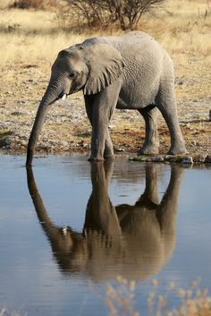 They're also one of the few species that can actually recognize themselves in the mirror.