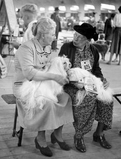 """ Dog Show RAI "" Amsterdam 1956. photo: Kees Scherer"