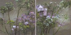 Claire Basler - Contemporary Artist - Flowers Queen Anne's Lace Flowers, Love Flowers, Claire Basler, Eye For Beauty, Queen Annes Lace, Butterfly Wallpaper, Seed Pods, Illustrations, Vintage Images