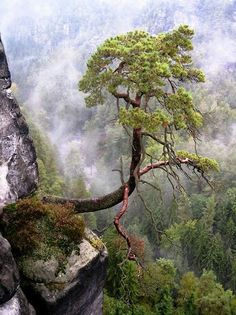 The Bastai, Saxon Switzerland National Park, Germany